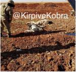 daesh-killed_albab
